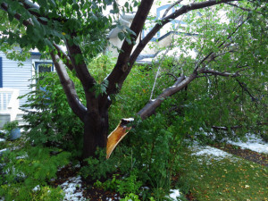 Split tree repair