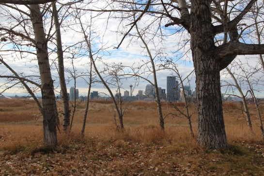 Trees and Calgary skyline