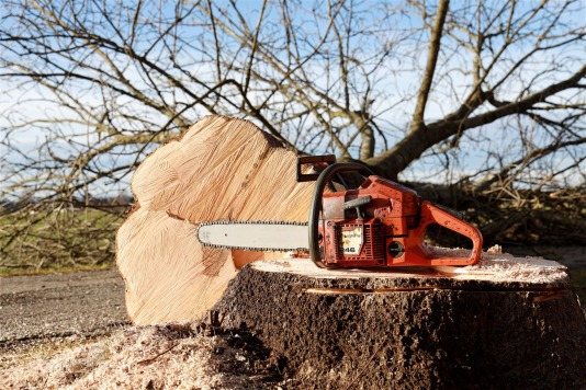 Tree cut down by chainsaw